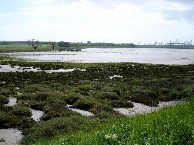 New salt marsh - geograph.org.uk - 1312418