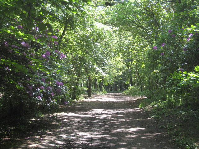 Path from the North Cliff carpark in North Cliff Plantation - geograph.org.uk - 809147