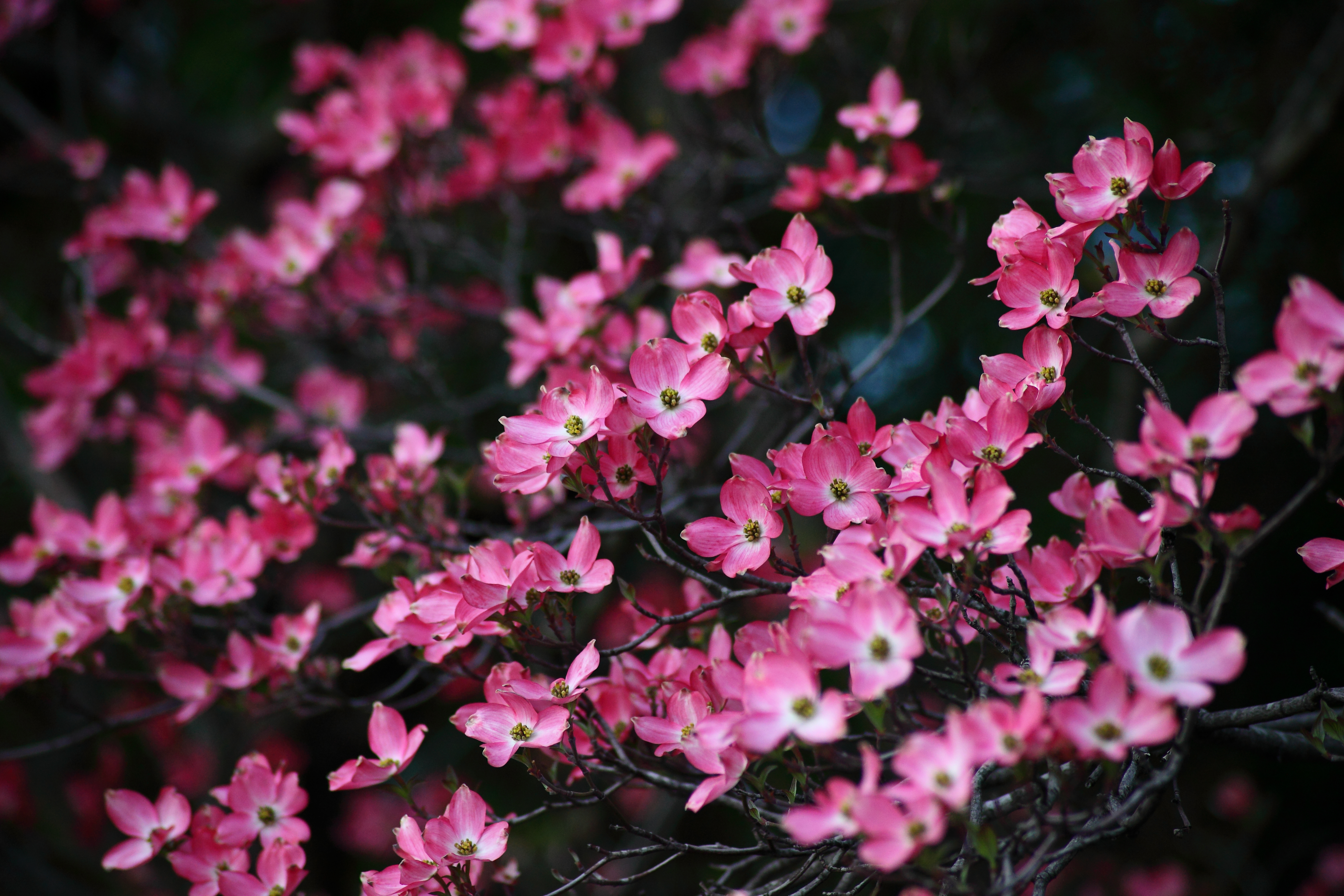 Small Spring Flowering Trees State By Gardening Articles