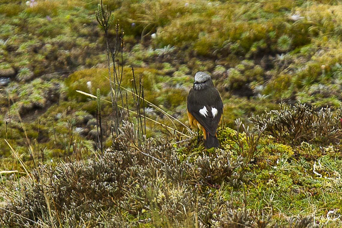 sveriges ornitologiska förening