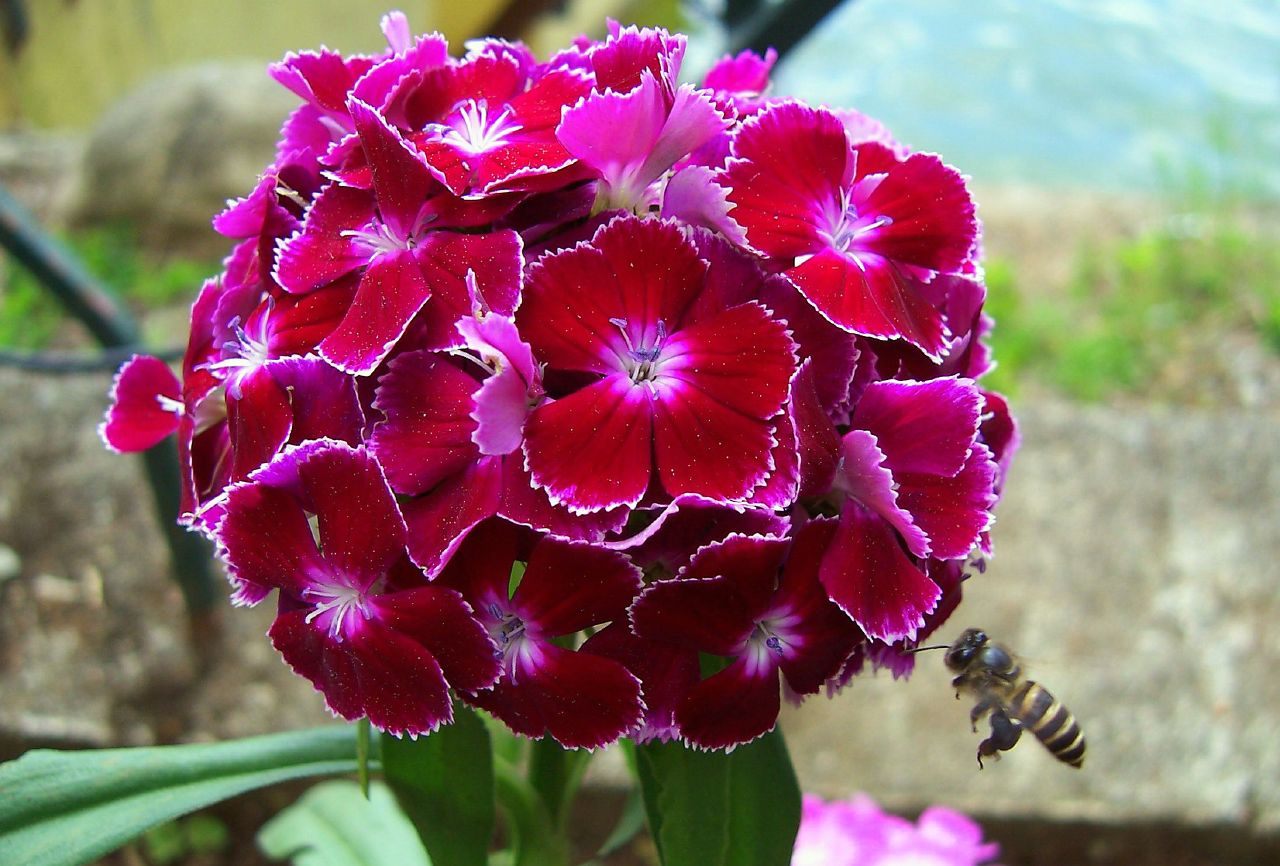 File:Red Flower.png - Wikimedia Commons