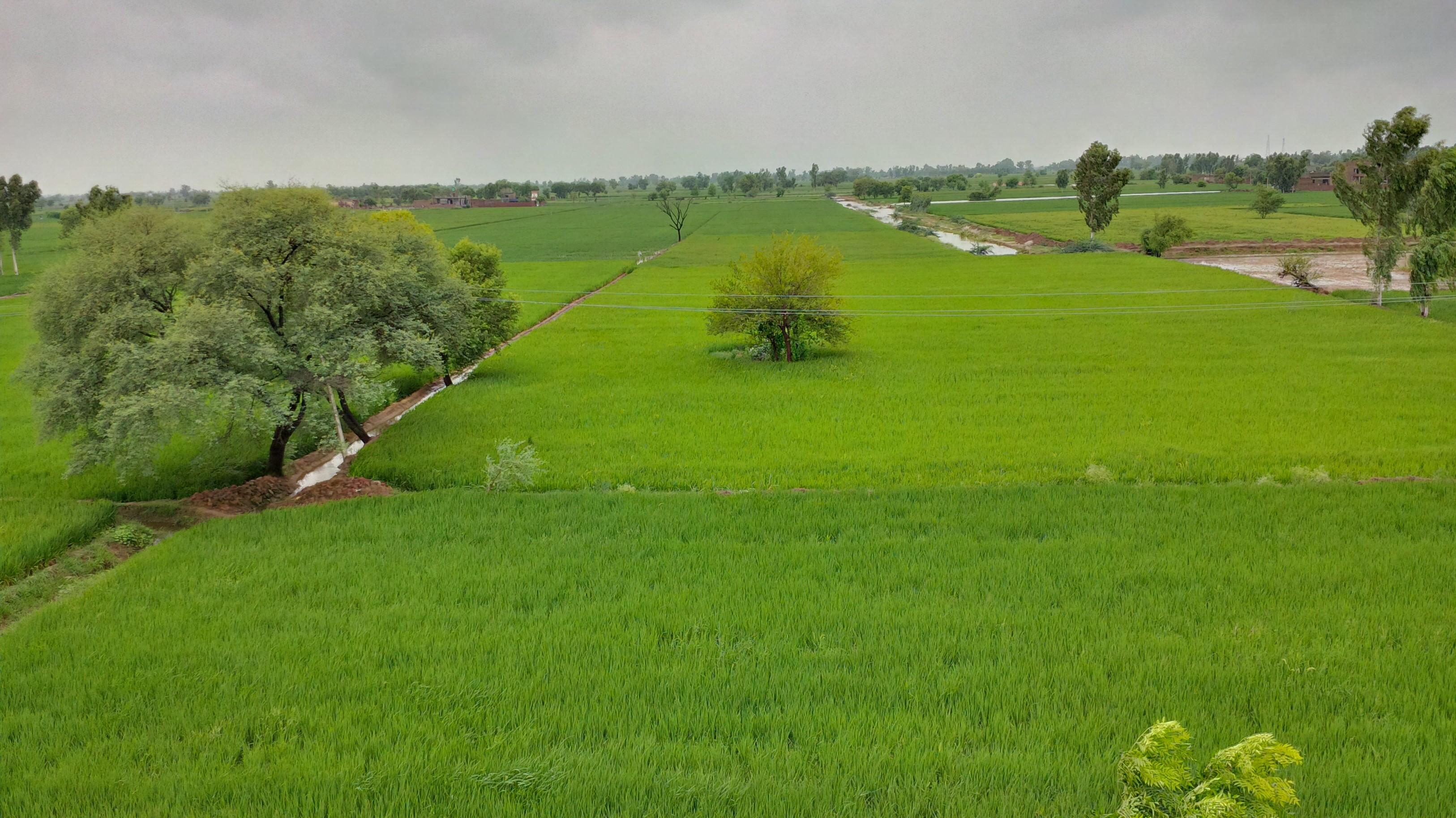Village Farm