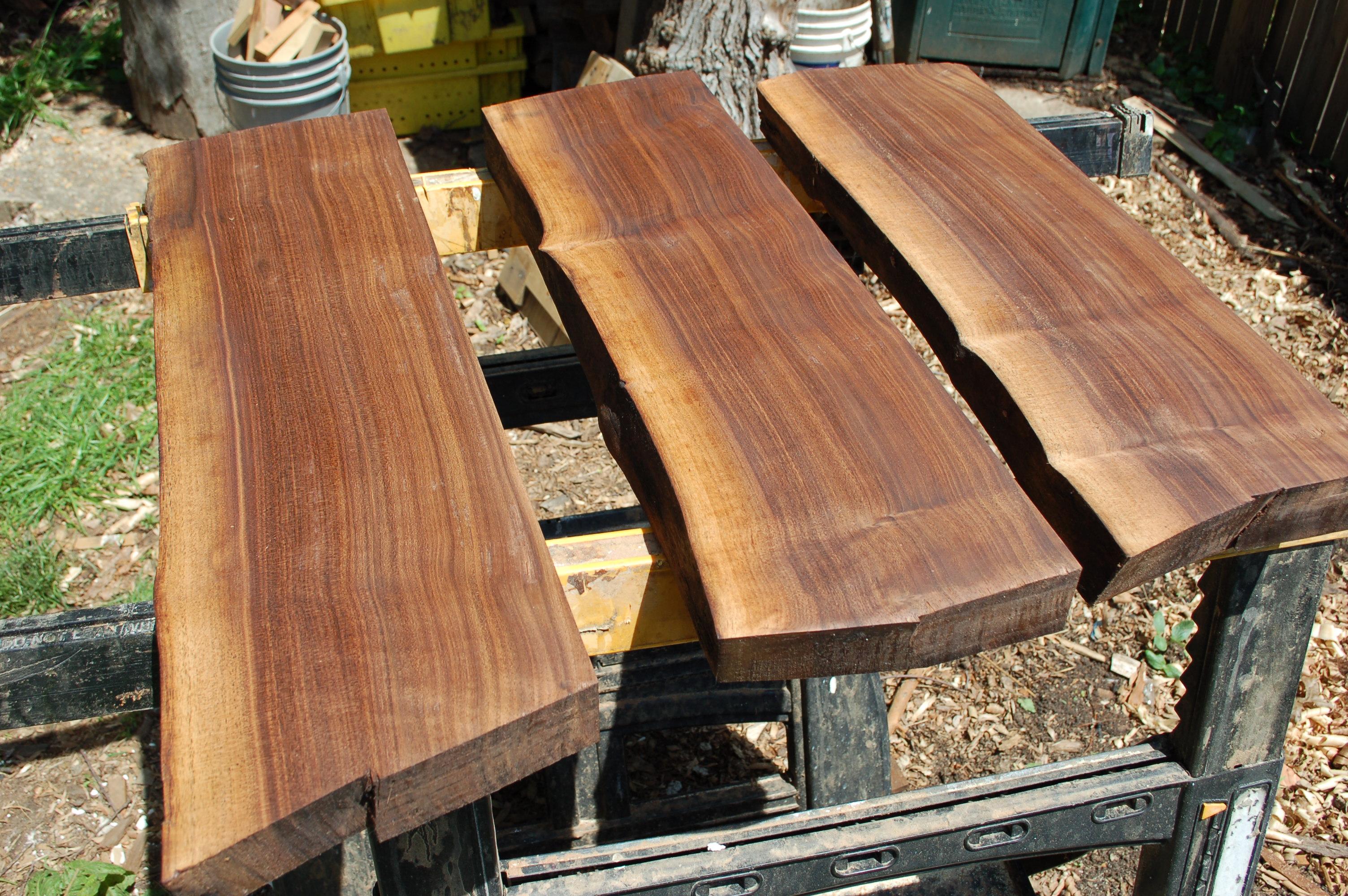 black-walnut-sapling-bark