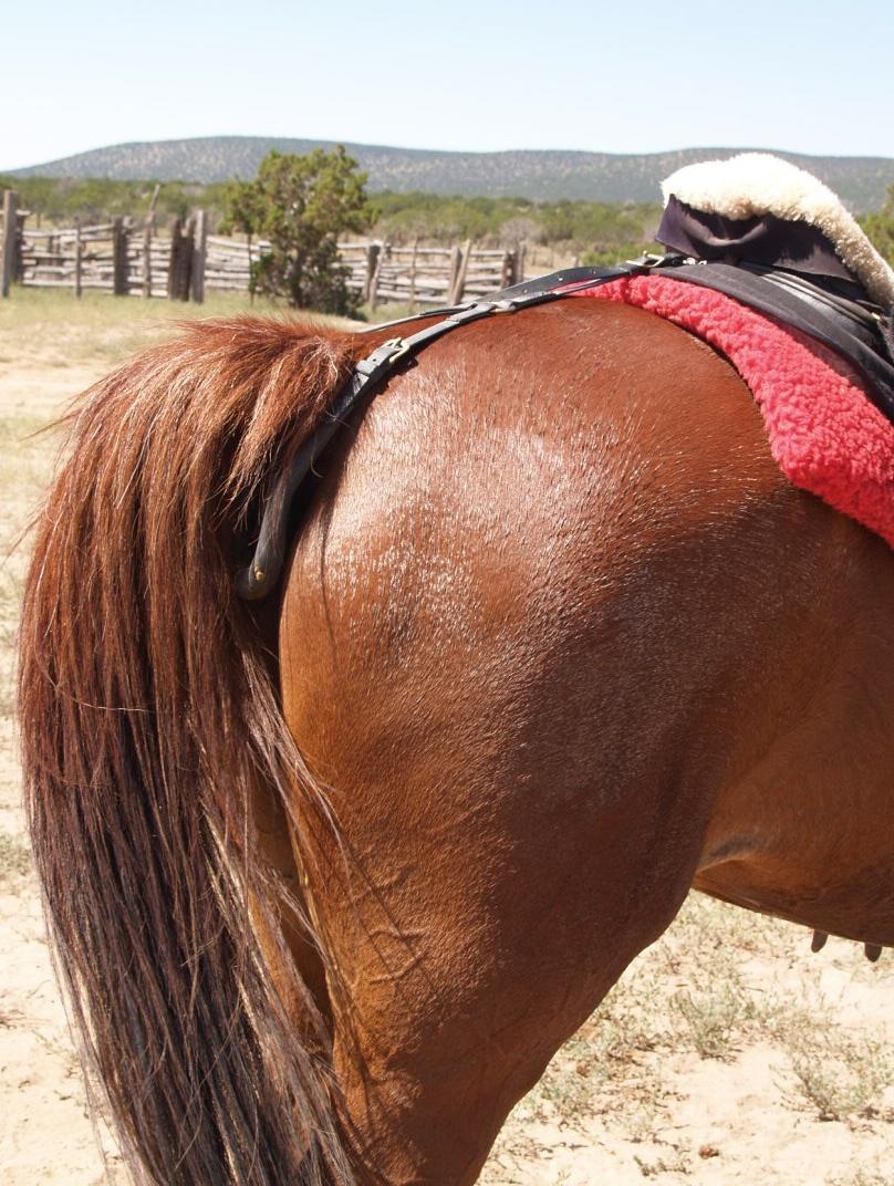 Kone bytte swingers