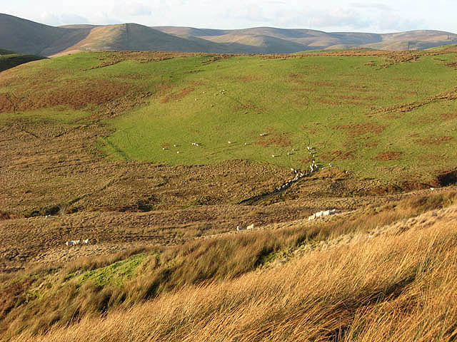 File:Sheep by the Hoghill Burn - geograph.org.uk - 683279.jpg