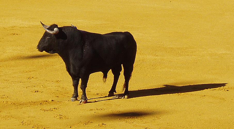 Risultati immagini per foto in bianco e nero e a colori di animali