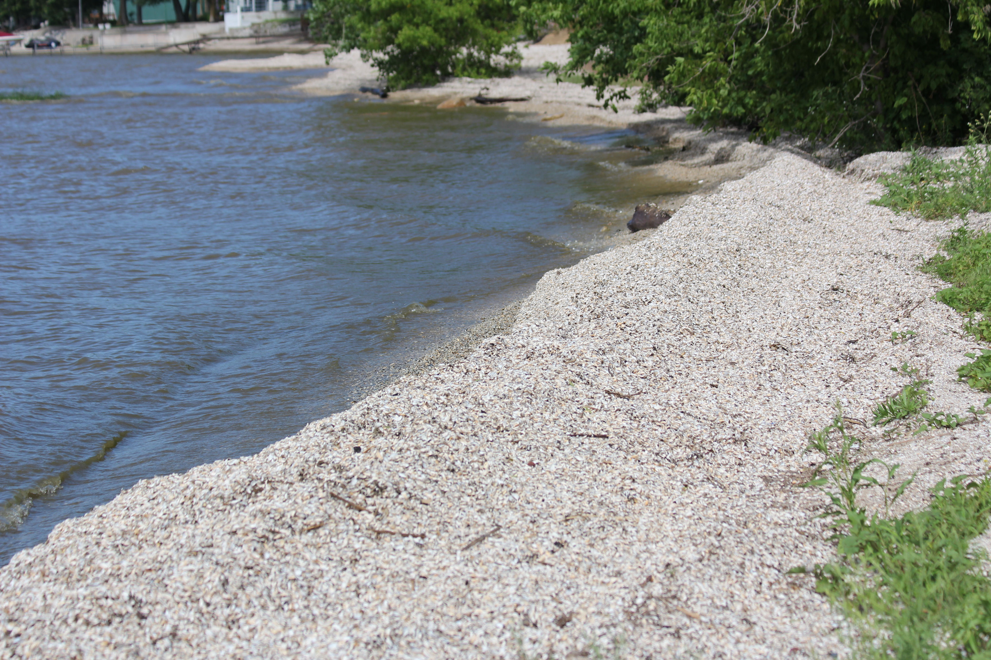 zebra muscles in the hudson river Preventing the spread of zebra mussels  the grand river dam authority joined the oklahoma zebra mussel task force two decades.