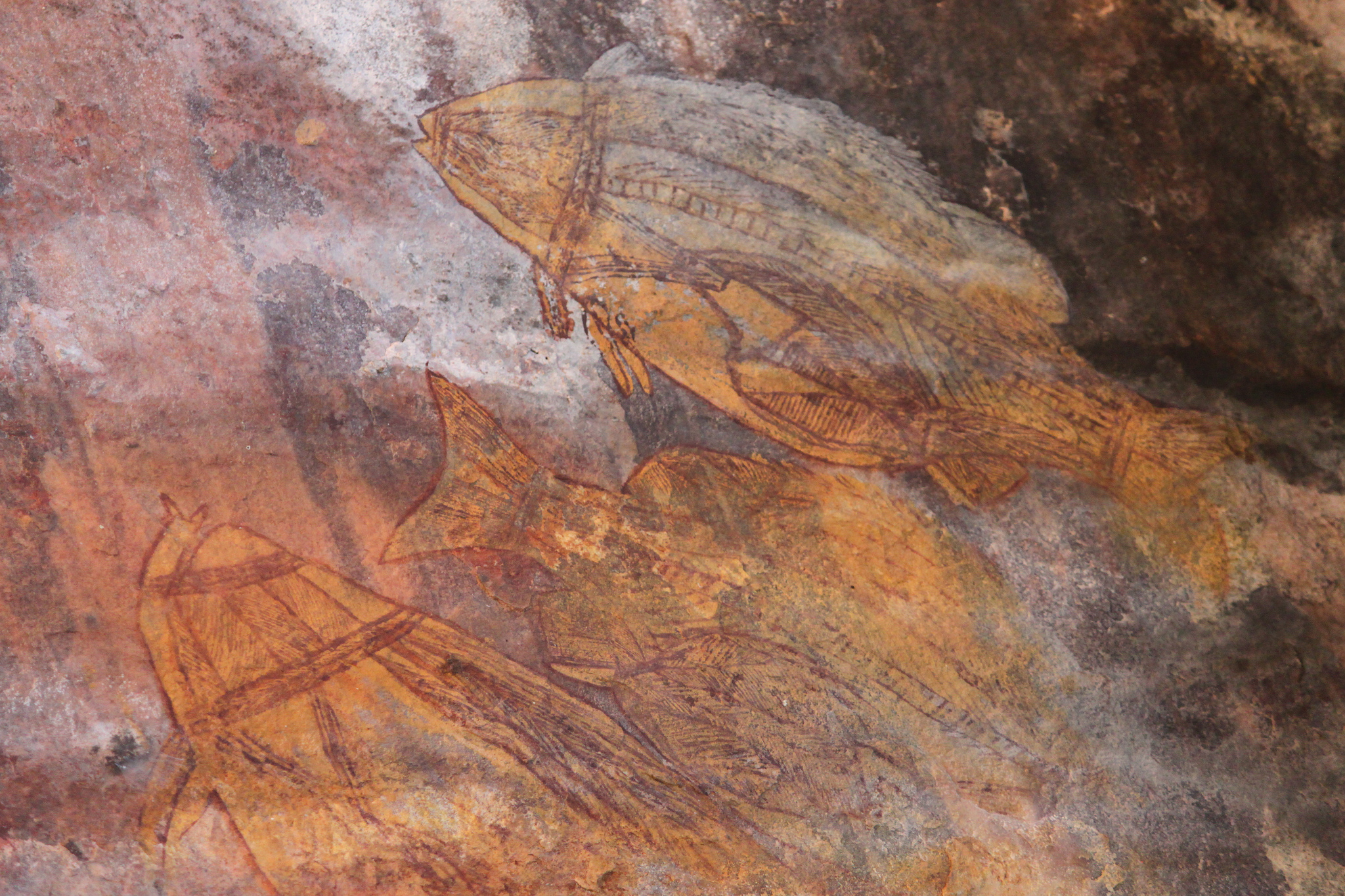 Aboriginal rock art -Ubirr Art Site, Kakadu National Park, Northern Territory, Australia-9June2012 (1).jpg
