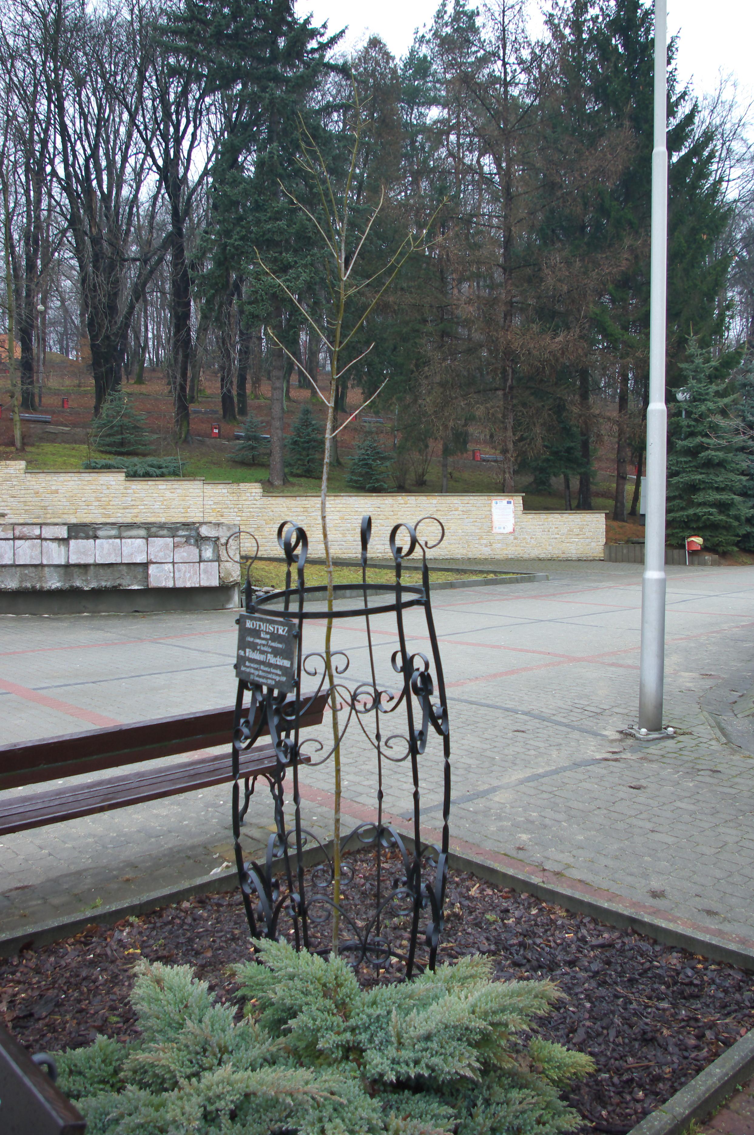 Fileacer Campestre Postelense Rotmistrz To Witold Pilecki At