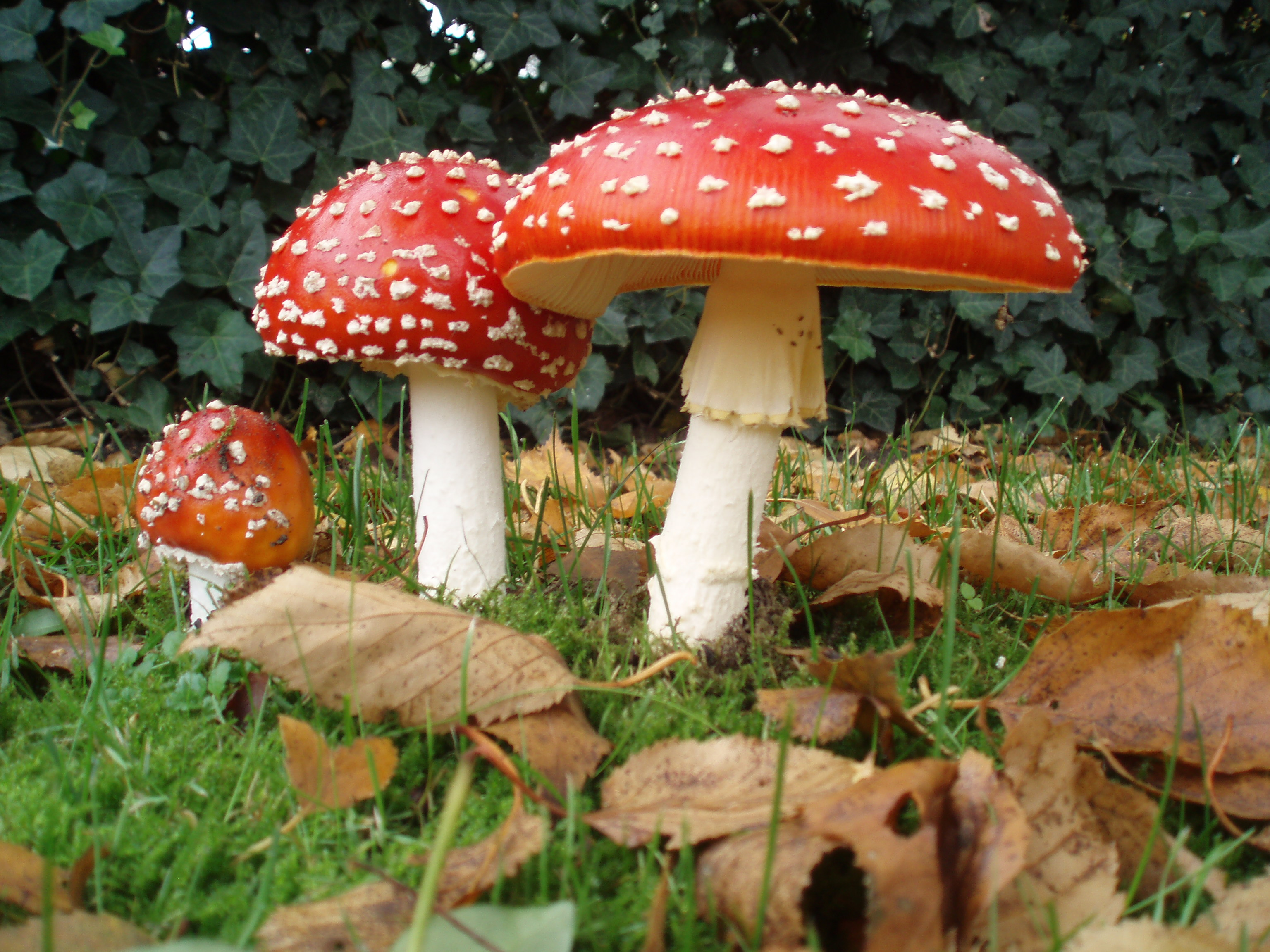 Korja ainult neid seeni, mida sa tead.