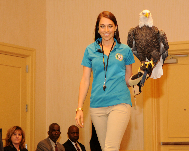 file american eagle foundation 10670165305 jpg wikimedia commons rh commons wikimedia org American Eagle Foundation Dollywood American Eagle Outfitters Foundation