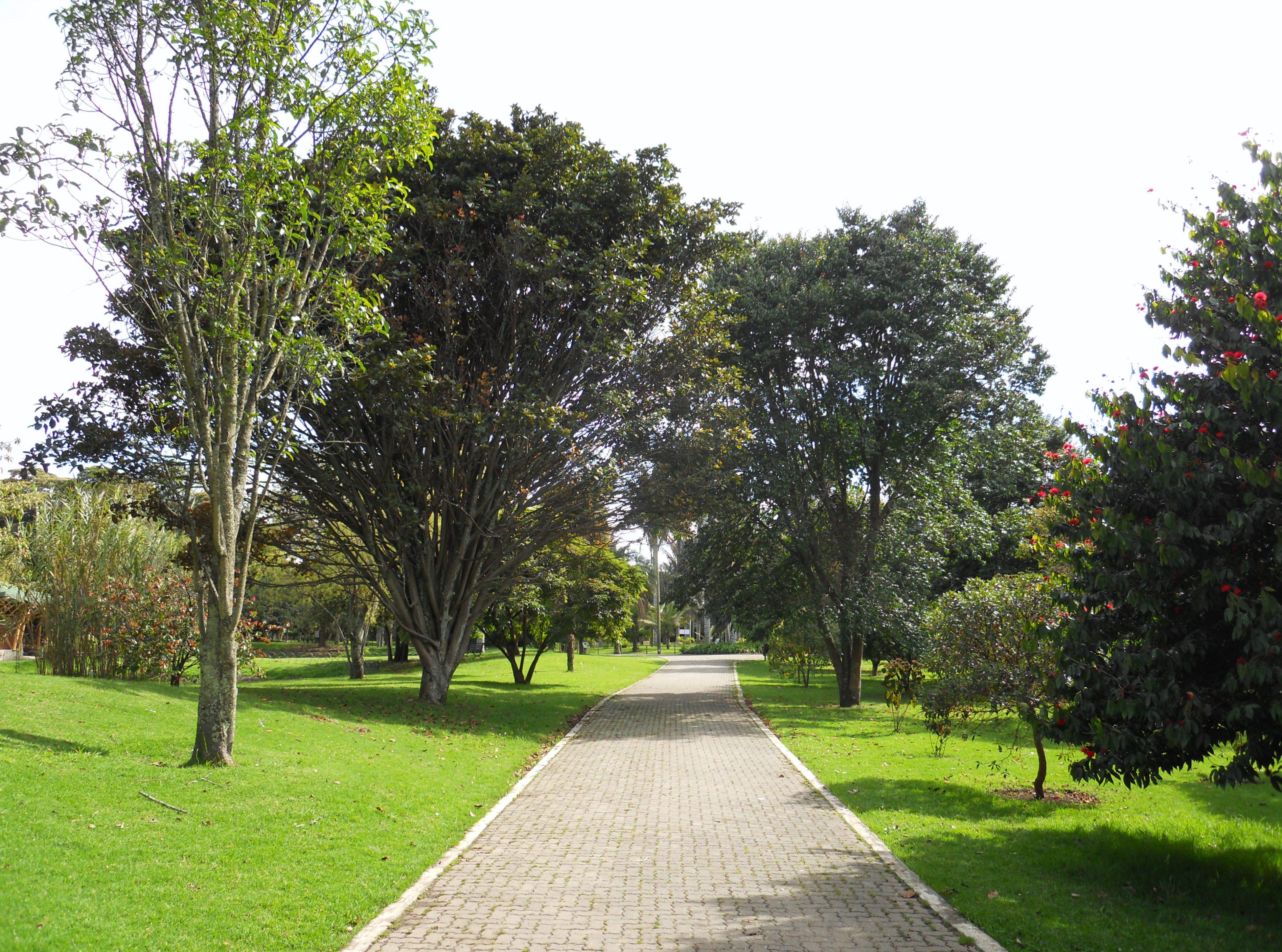 File bogot jard n bot nico jpg wikimedia commons for Jardin botanico bogota