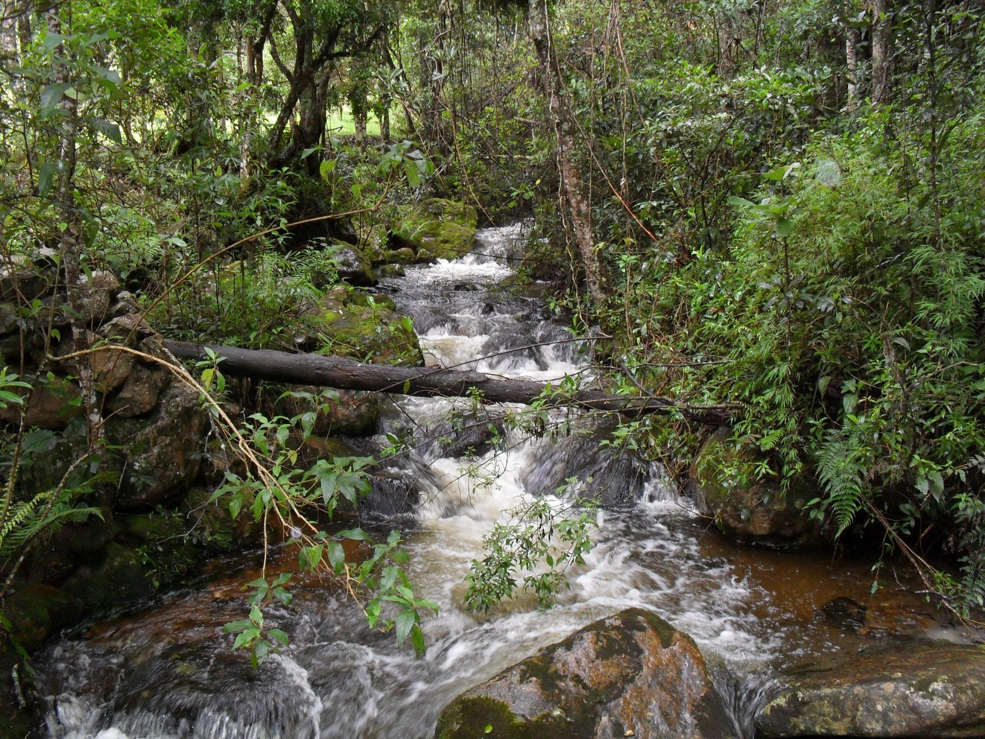 Iguaquen kansallispuisto