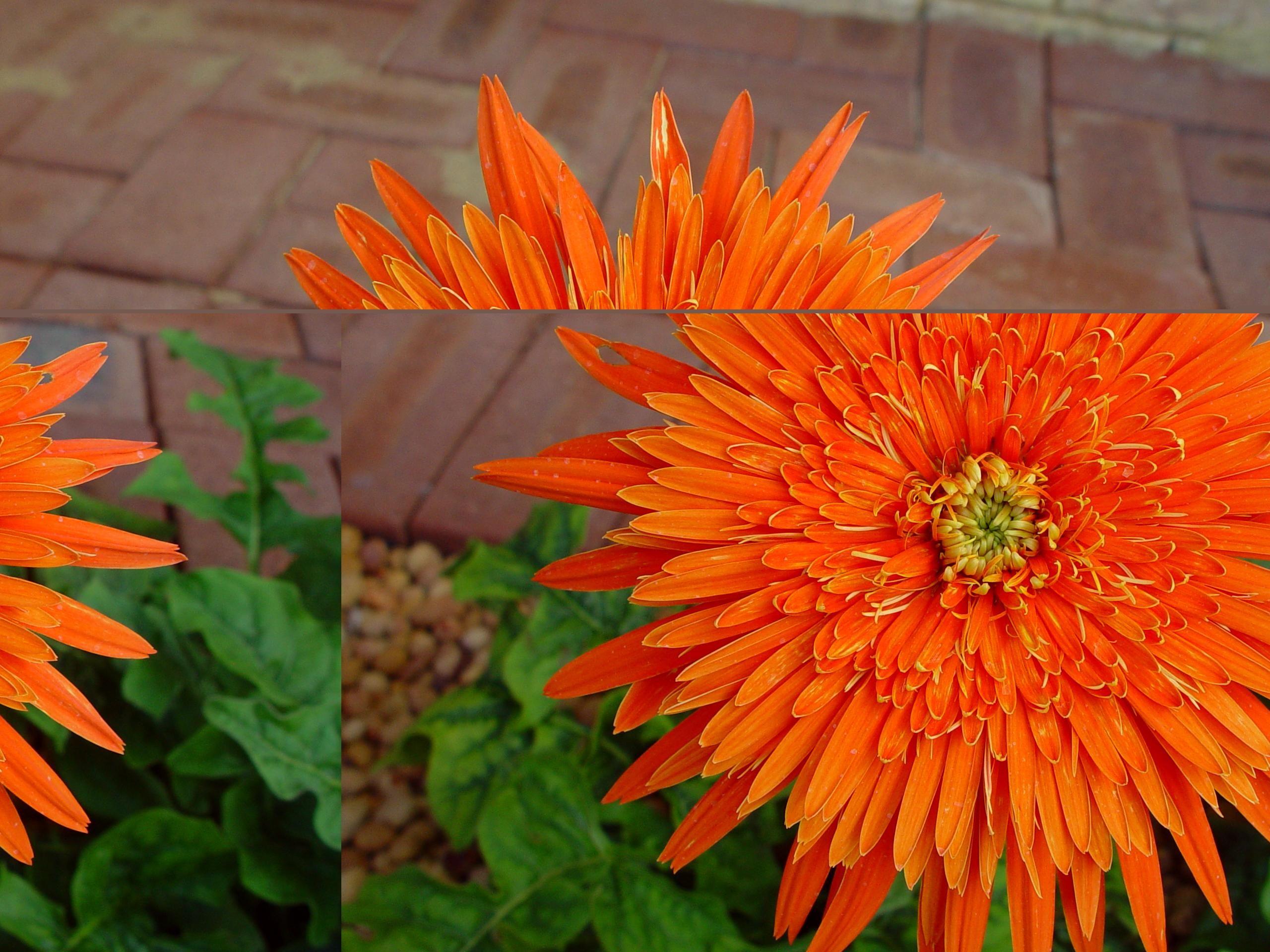 Filebright orange flowerg wikimedia commons filebright orange flowerg izmirmasajfo Choice Image