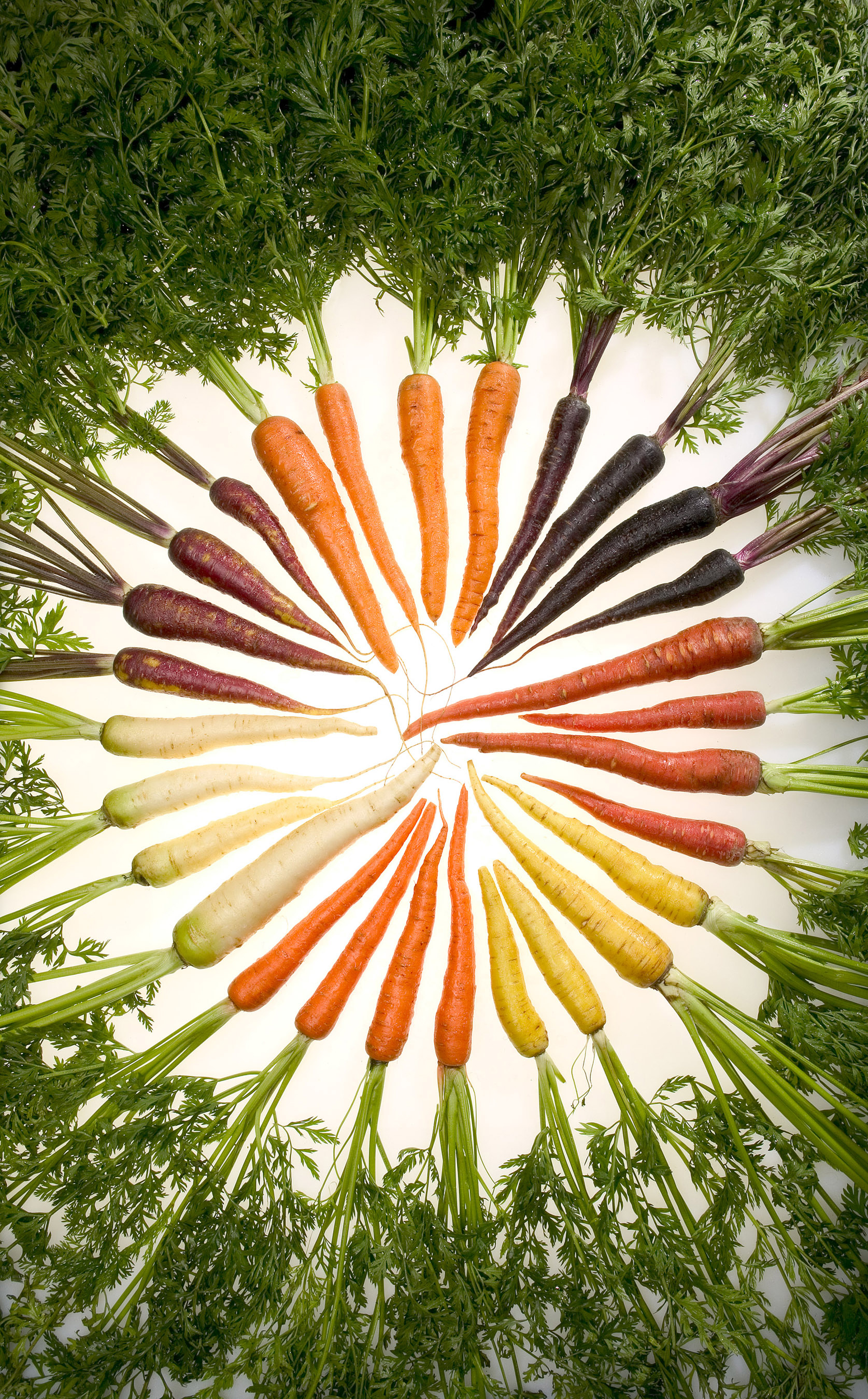 http://upload.wikimedia.org/wikipedia/commons/3/32/Carrots_of_many_colors.jpg