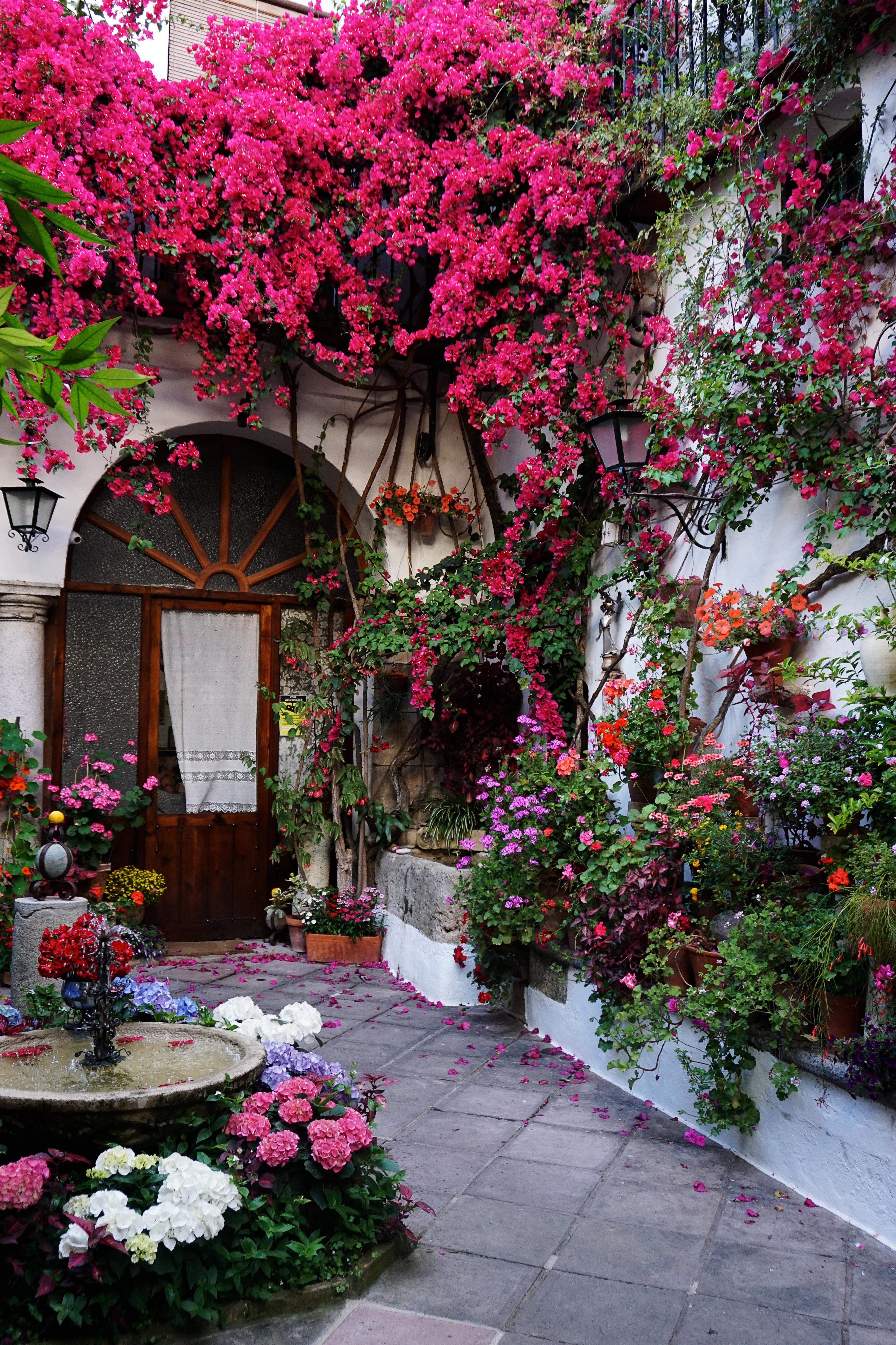 File Colorful Courtyards in Cordoba Spain Fiesta De Los Patios