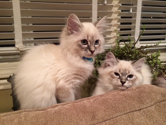 a picture of cats