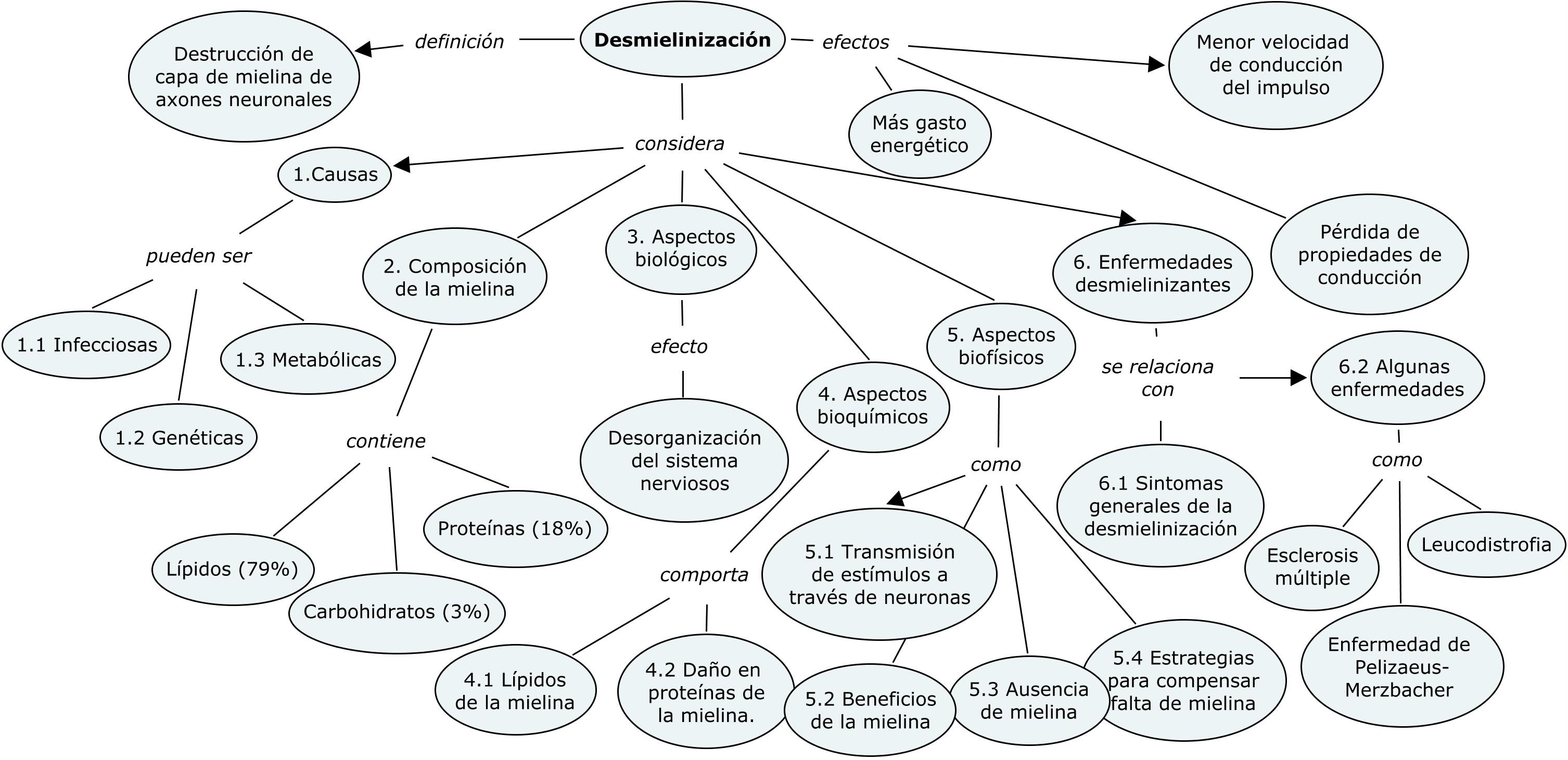 Mielina definicion y funcion