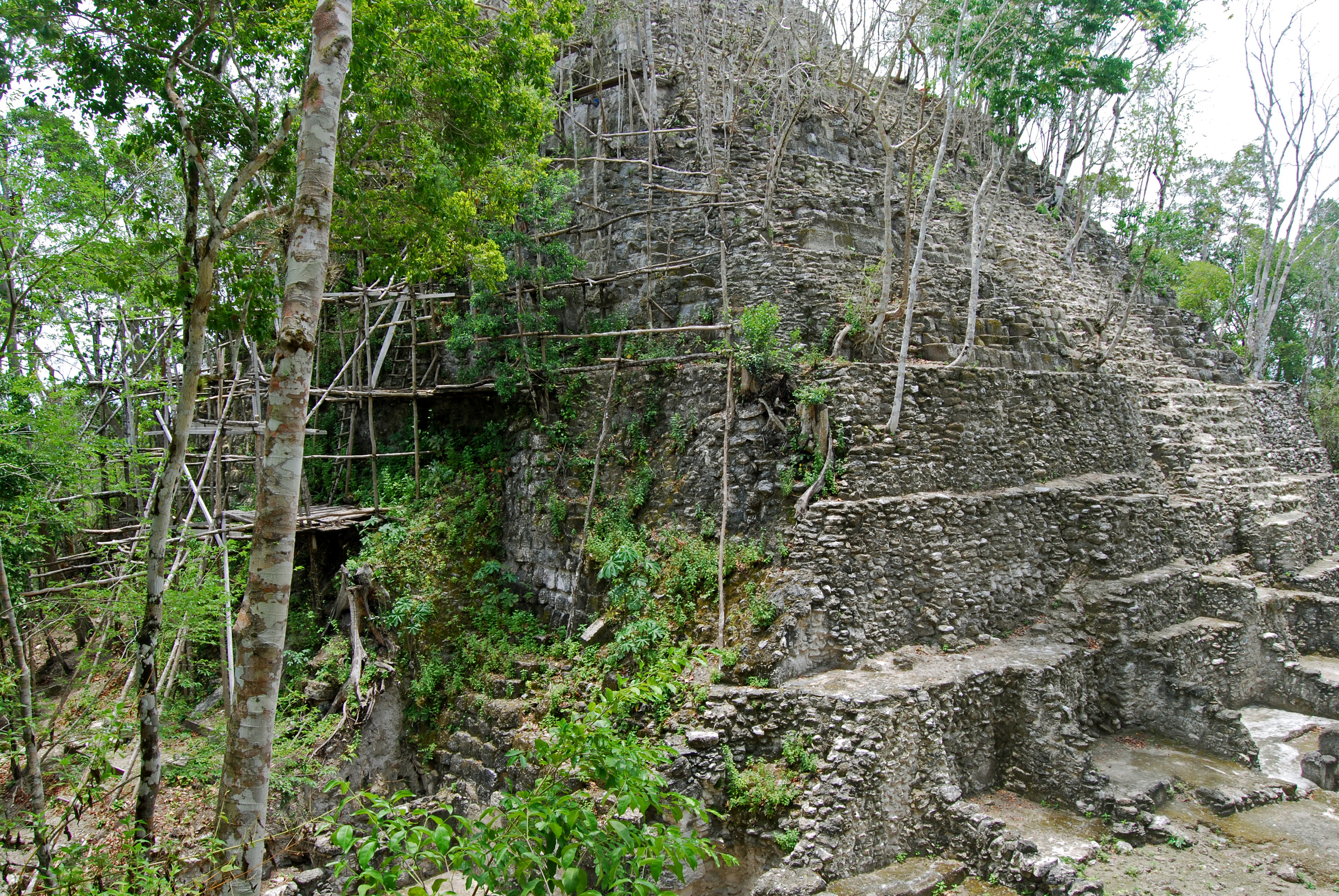 Mayan-temple-jungle-overgrowth-El-Mirador