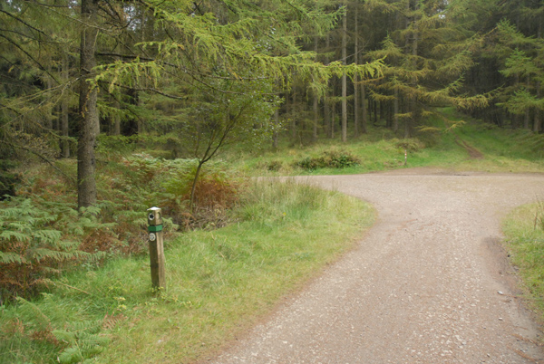 Forest Track Junction in Afan Forest Park - geograph.org.uk - 576832