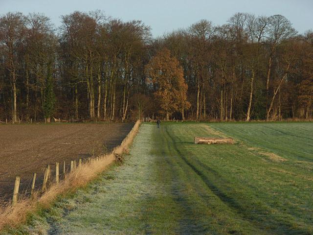 High Wood - geograph.org.uk - 292764