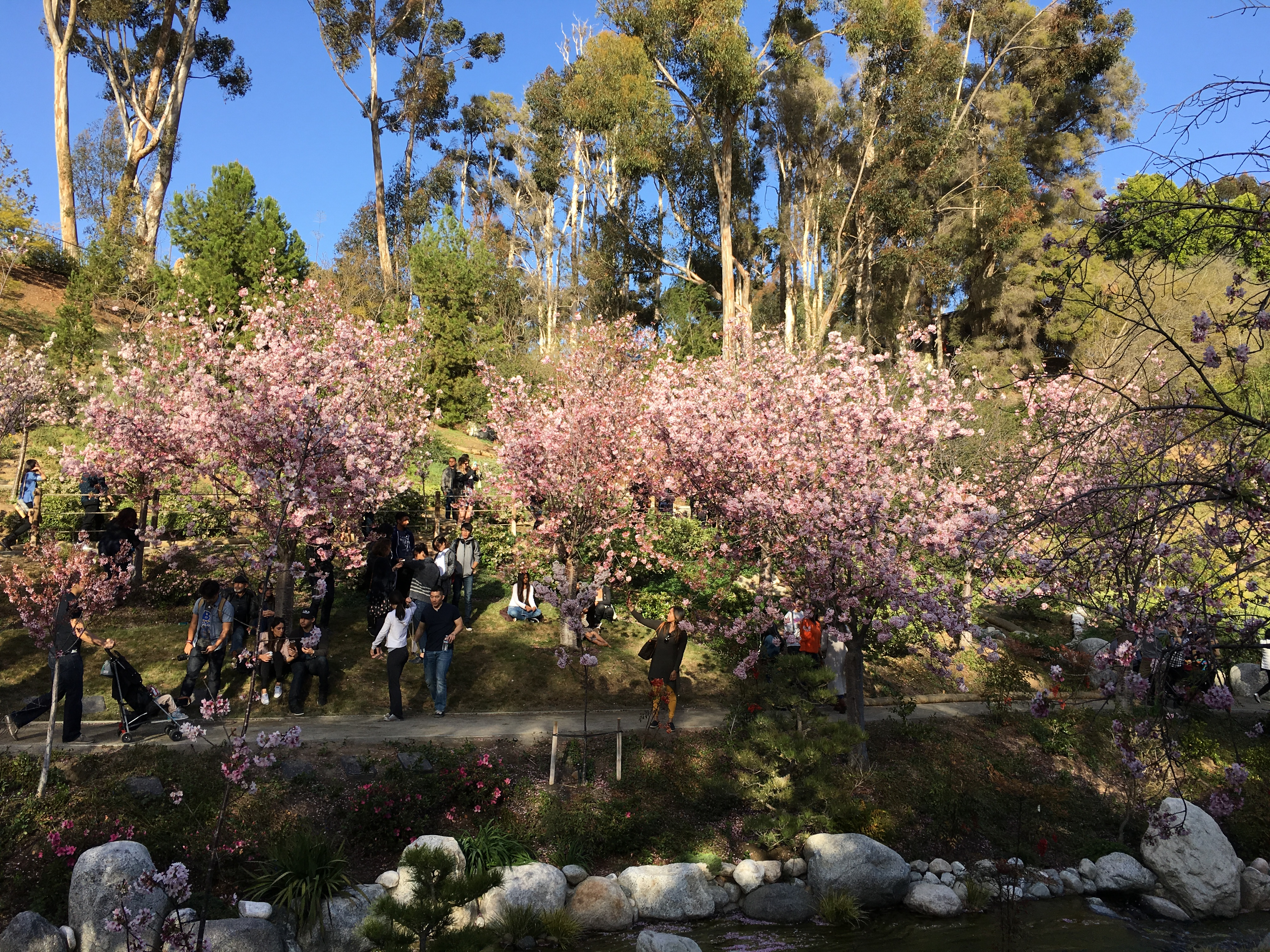 File:Japanese Friendship Garden (Balboa Park, San Diego) 21 2016-05 ...