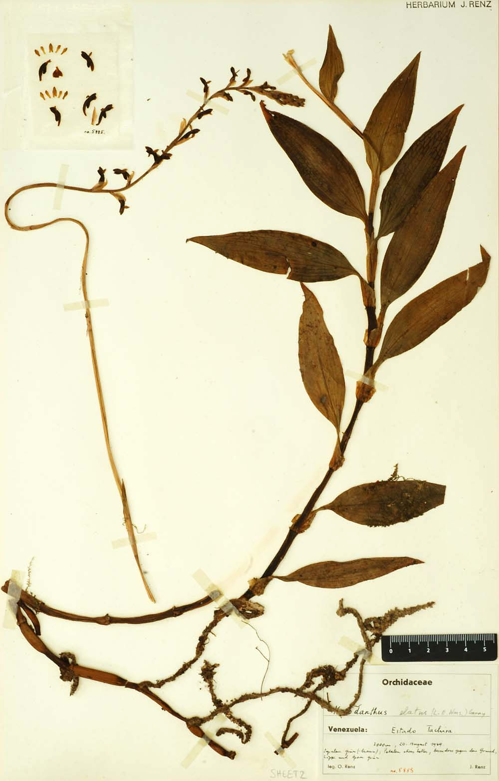 Virtual Herbarium Wikipedia