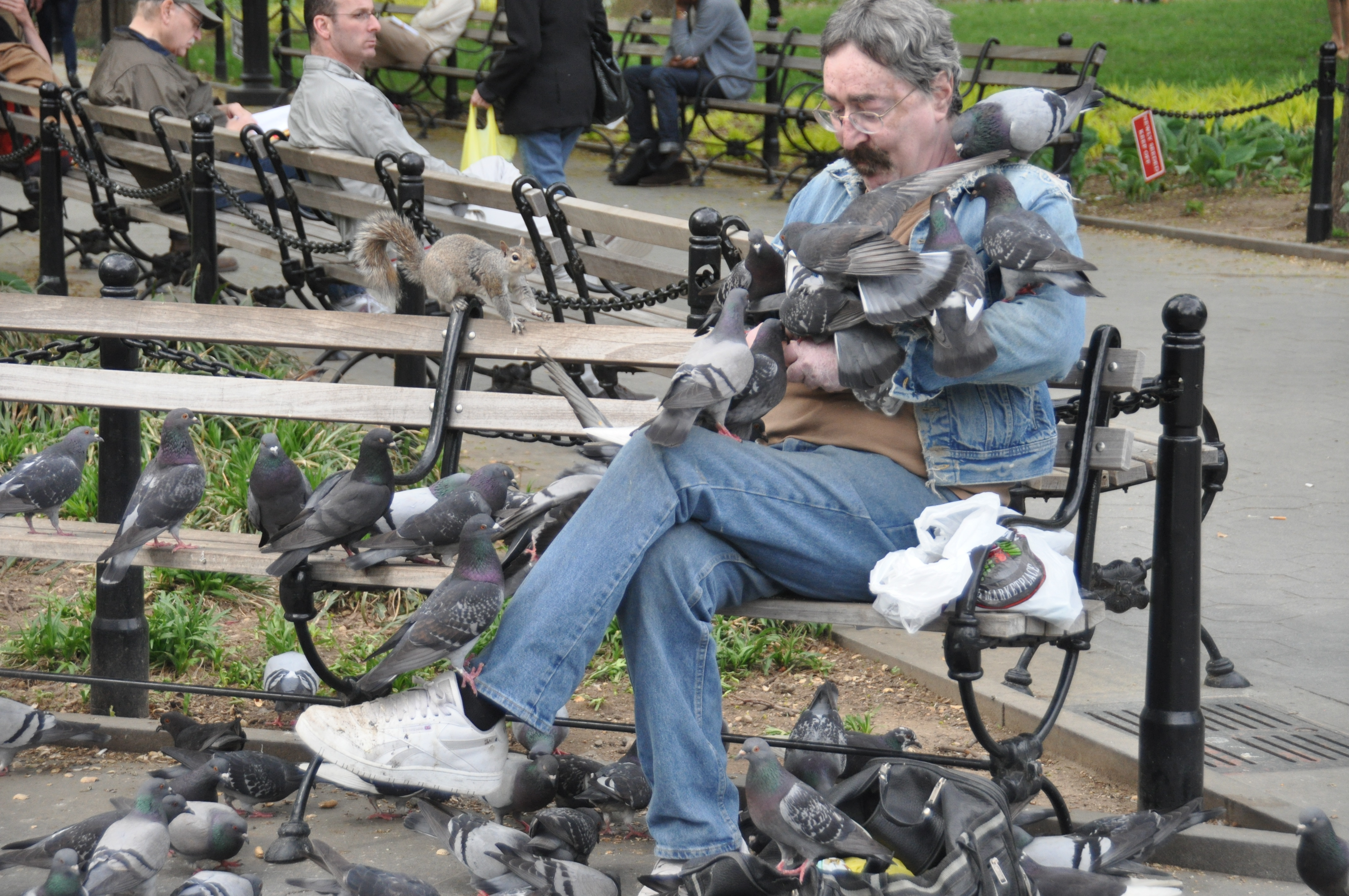 File man with many pigeons in washington square park new york