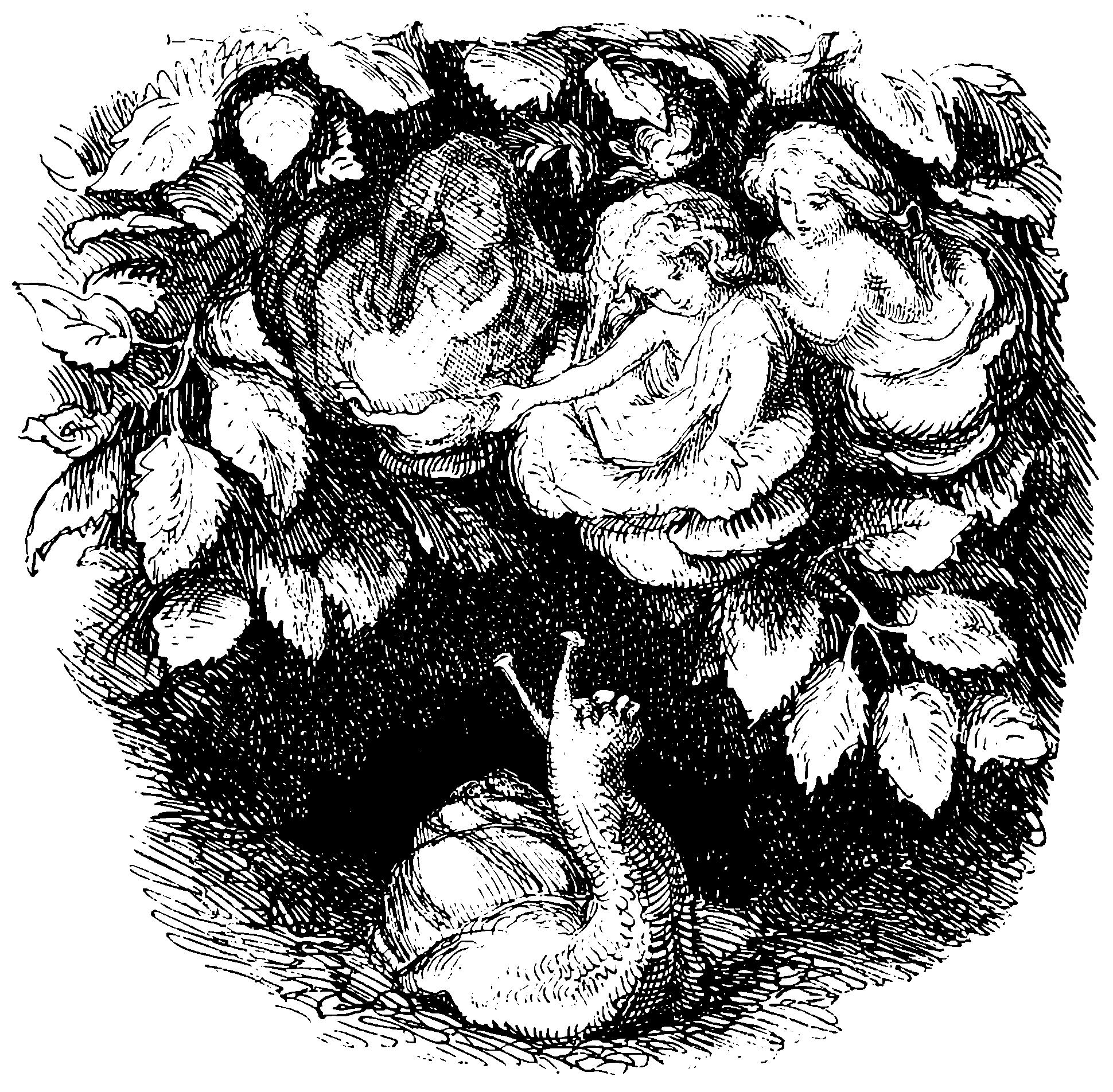 hc andersen sneglen og rosenhækken