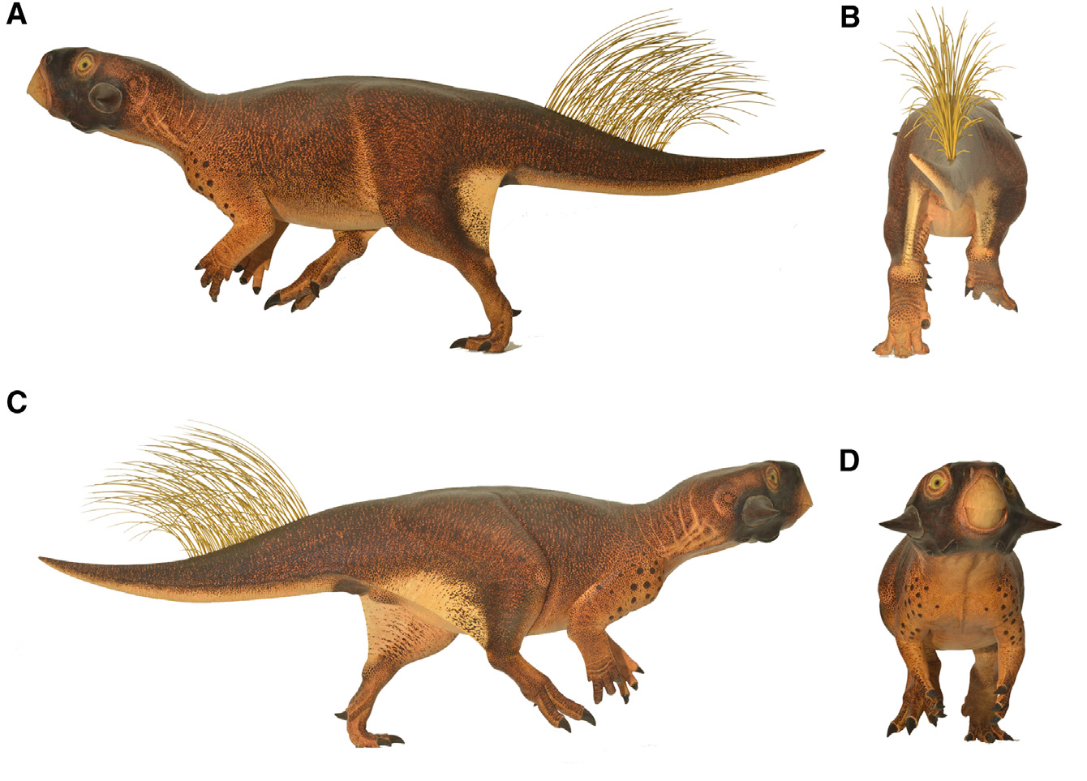 File:Psittacosaurus model.jpg - Wikimedia Commons