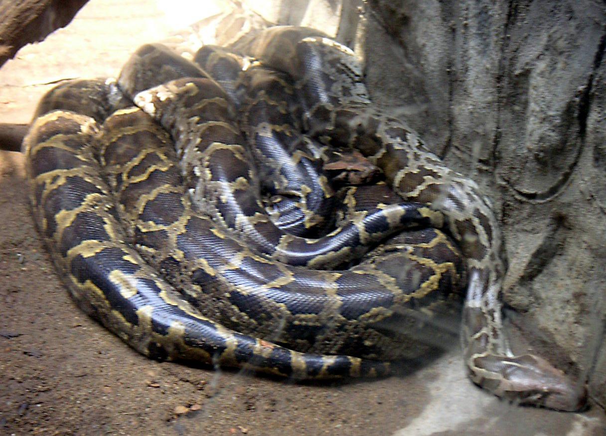 python d233finition cest quoi