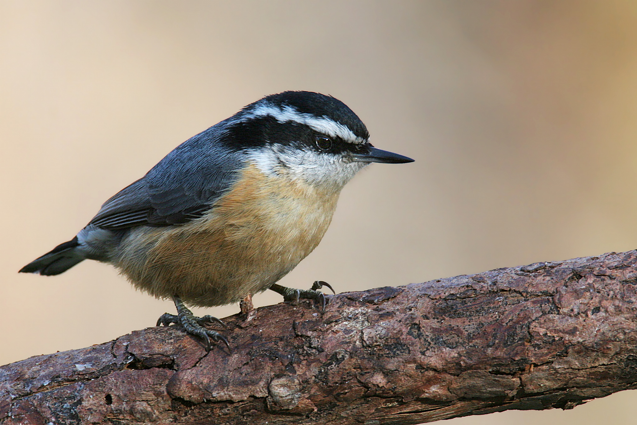 Backyard Birds Of Rhode Island