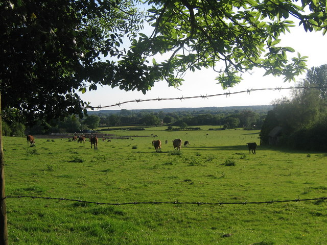 Rockford Common - geograph.org.uk - 391209