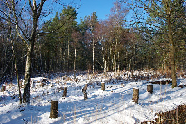 Snowy clearing, Spruce Hill - geograph.org.uk - 1627041