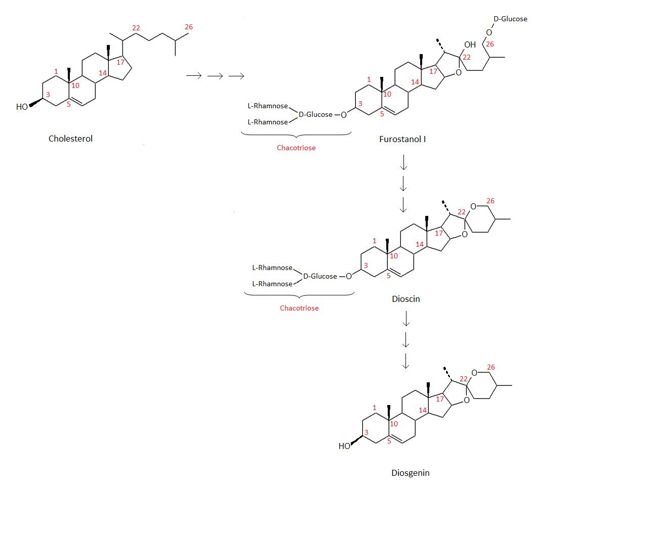 steroidhormonen