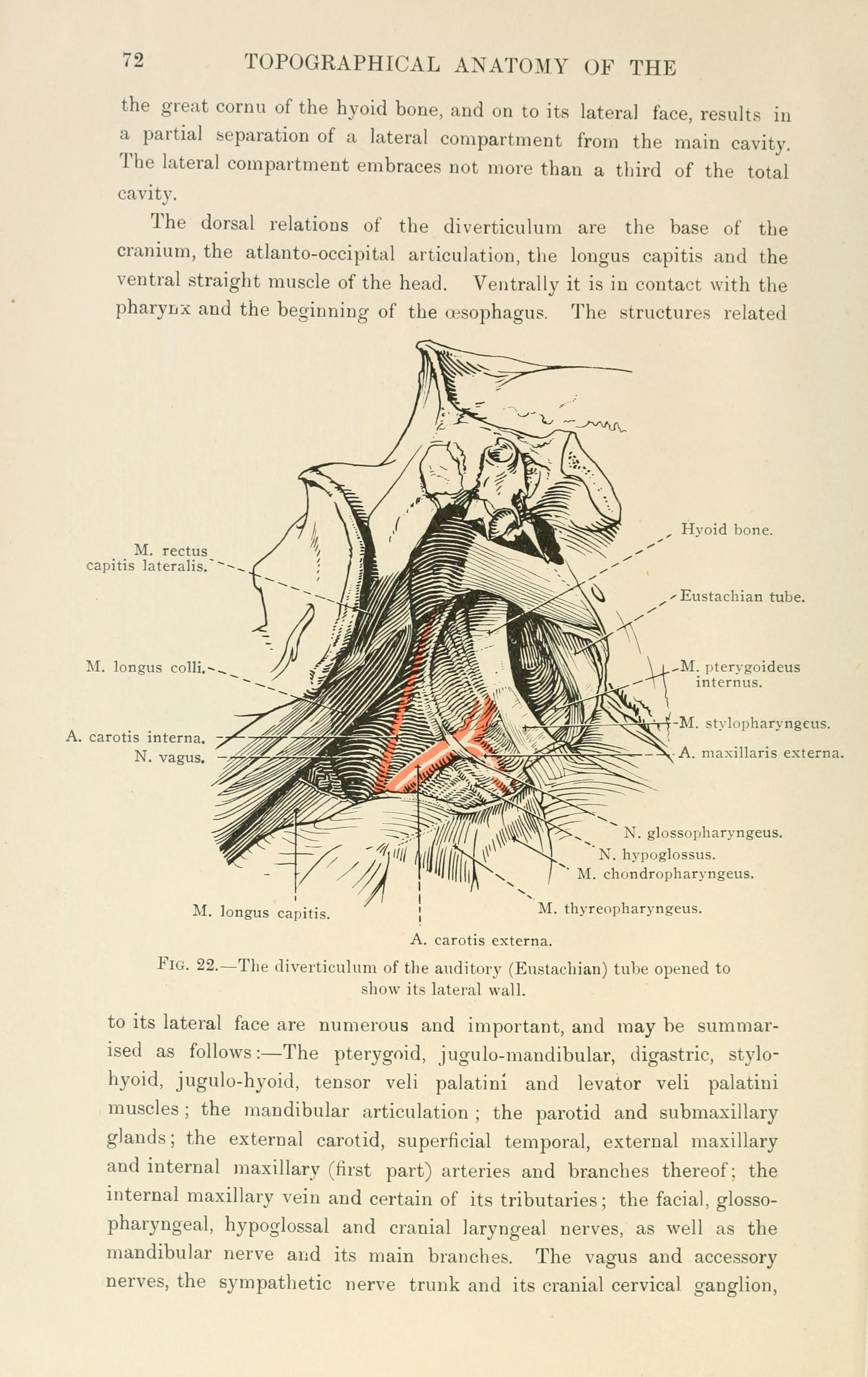 File:The topographical anatomy of the head and neck of the horse ...