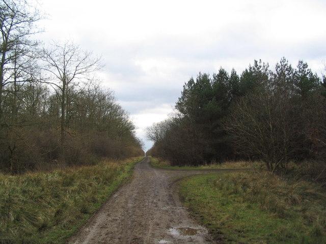Track through Fermyn Woods - geograph.org.uk - 324310