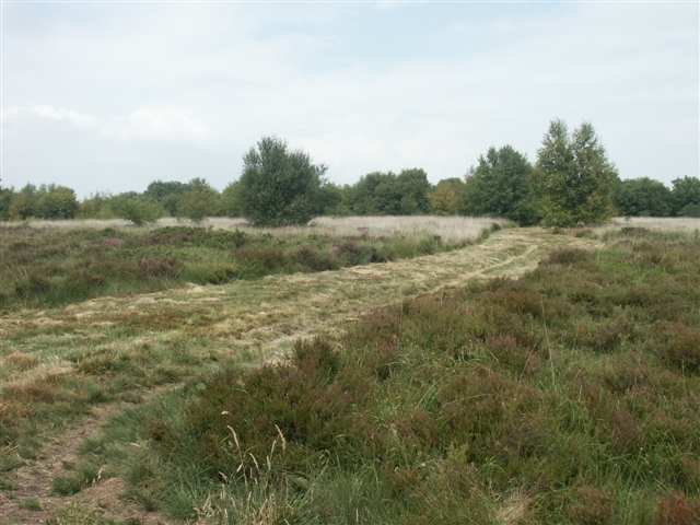 Trinity Hill Nature Reserve - geograph.org.uk - 231612