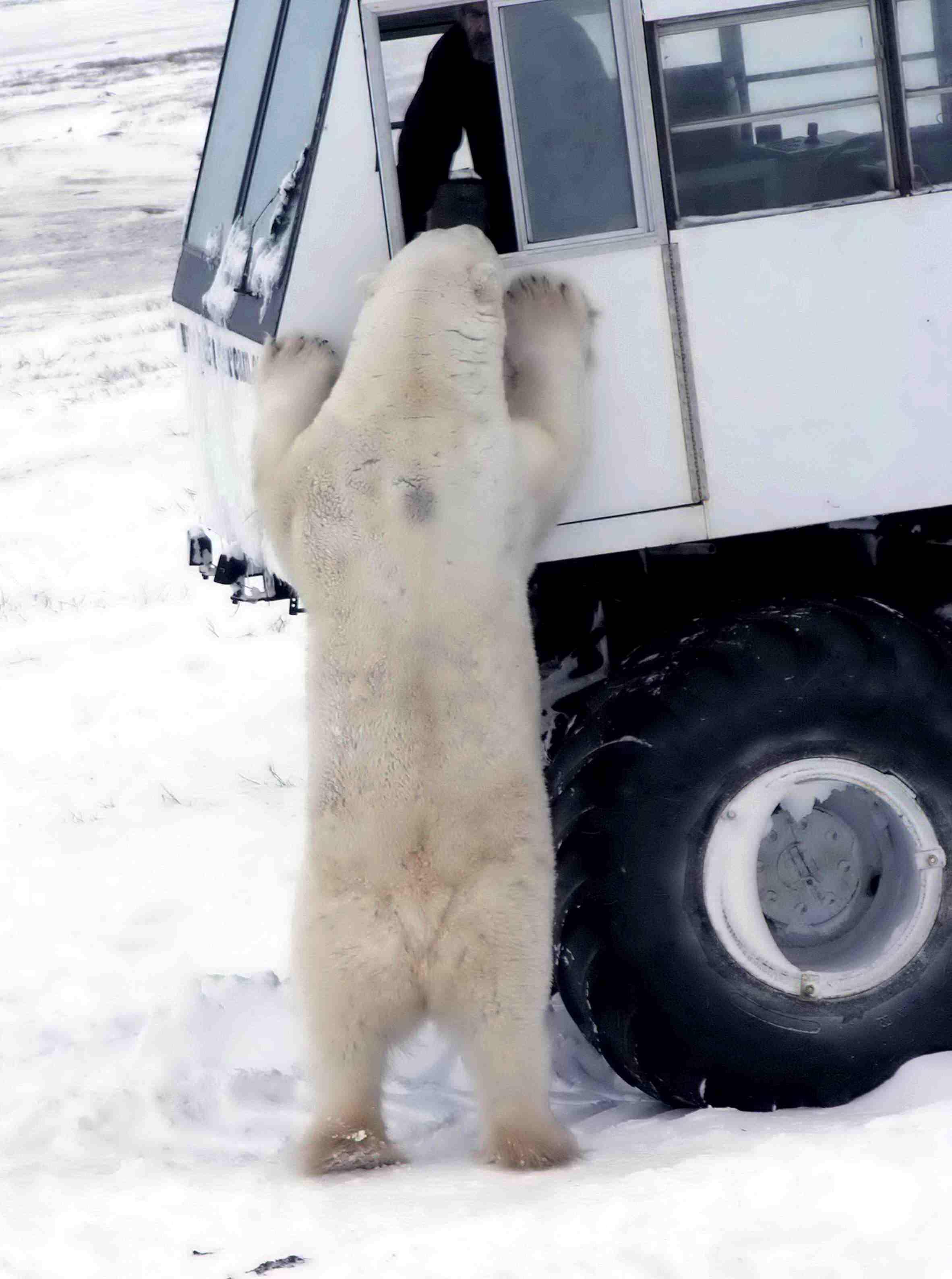 [Image: Tundra_Buggy_2004-11-13.jpg]