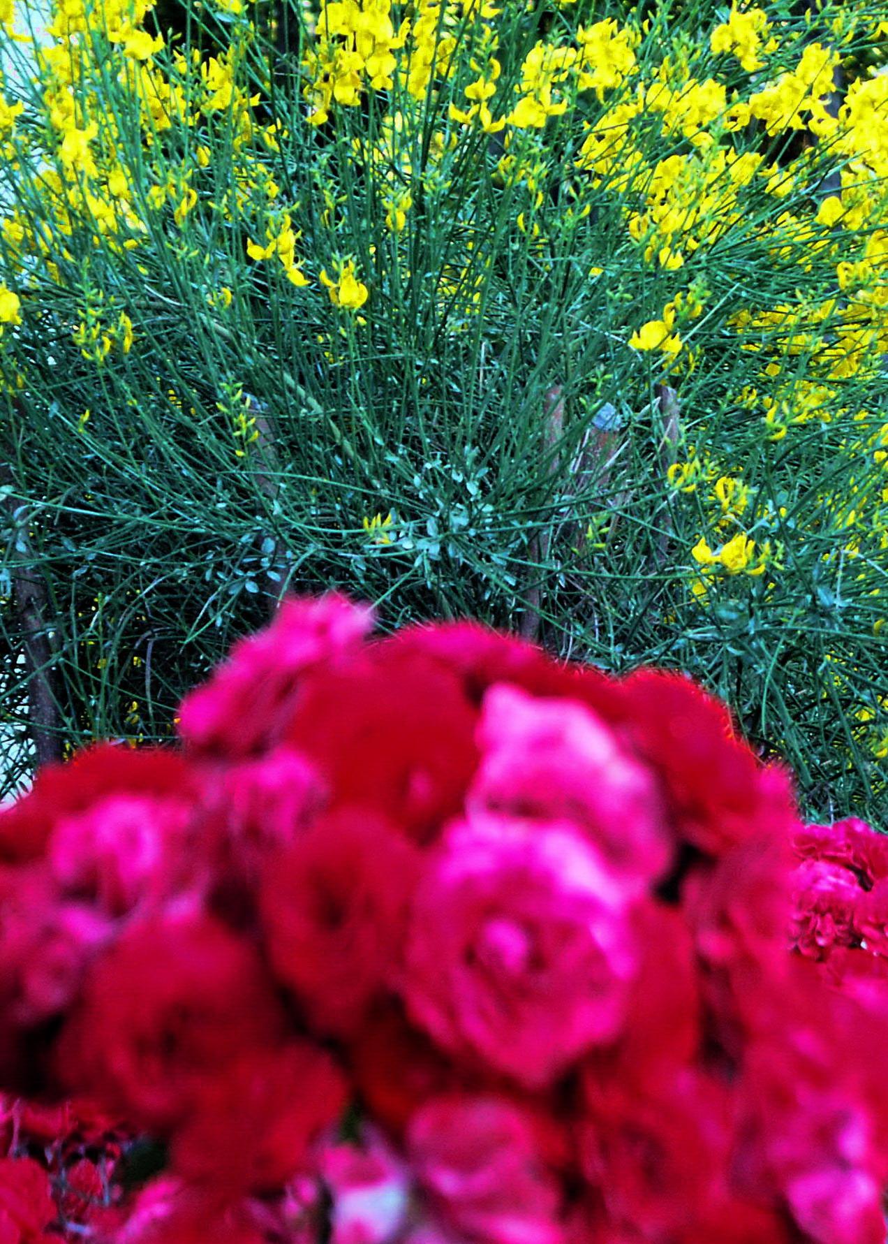 magasin en ligne 53b4e 2addf File:亞崴農旅店 Hotel Mercure Avignon - panoramio.jpg ...