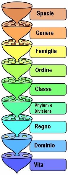 Categorie tassonomiche