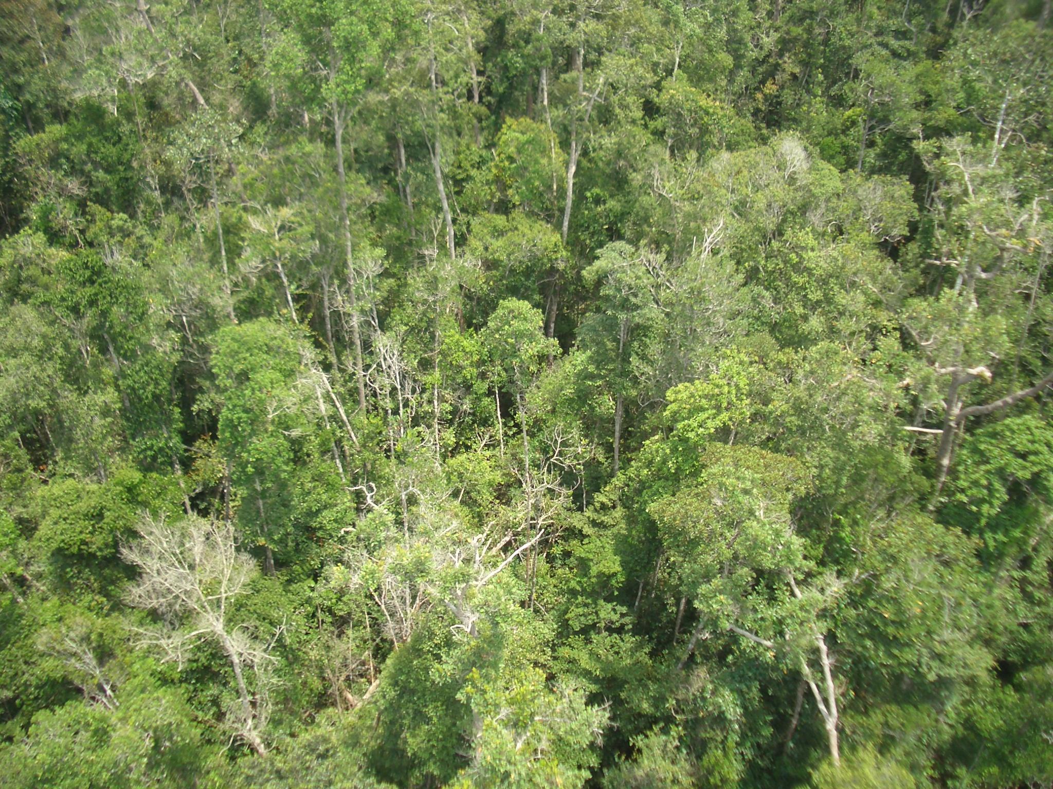 102 Gambar Hewan Hutan Hujan Tropis Gratis