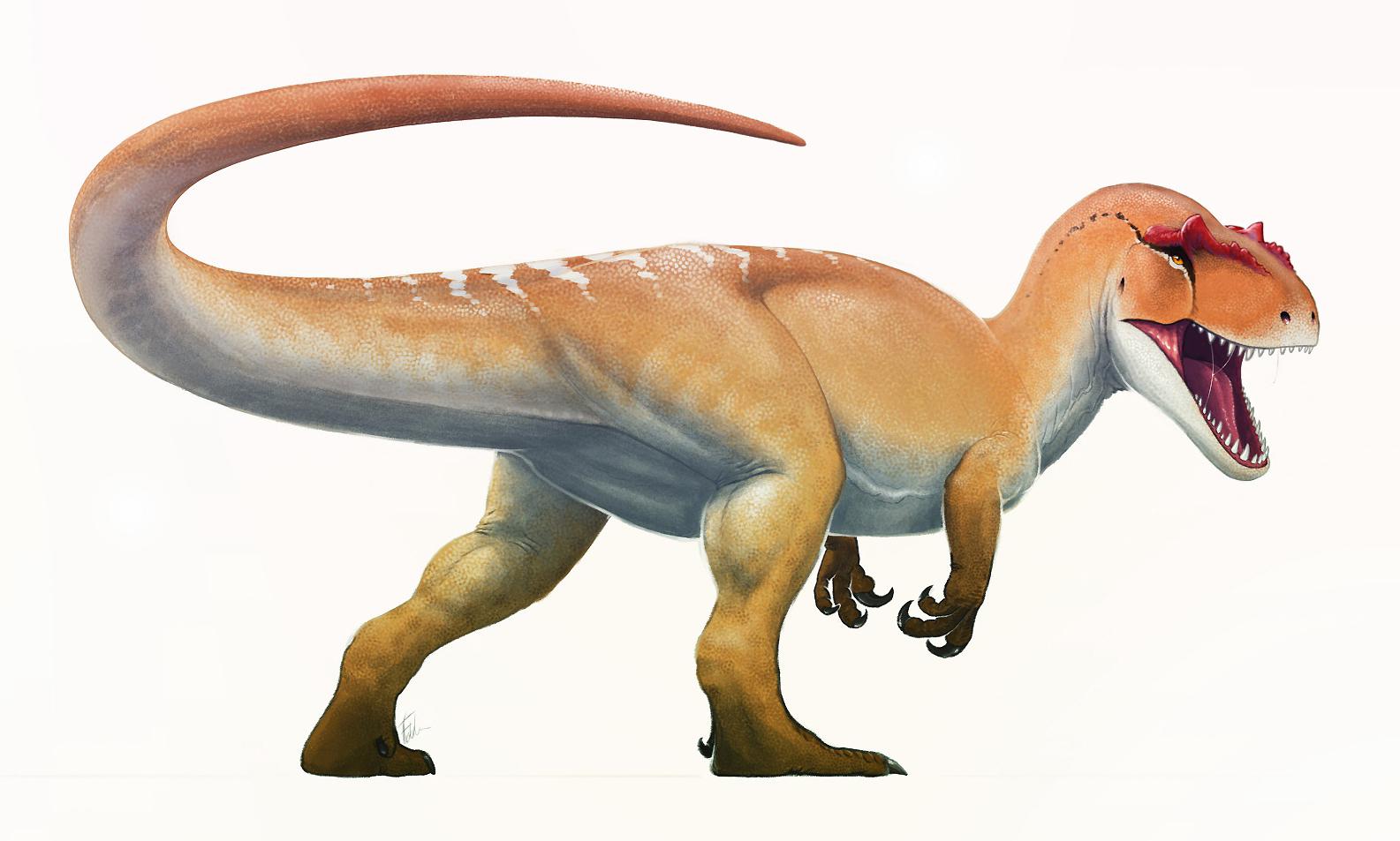 Reconstitution d'un Allosaurus fragilis