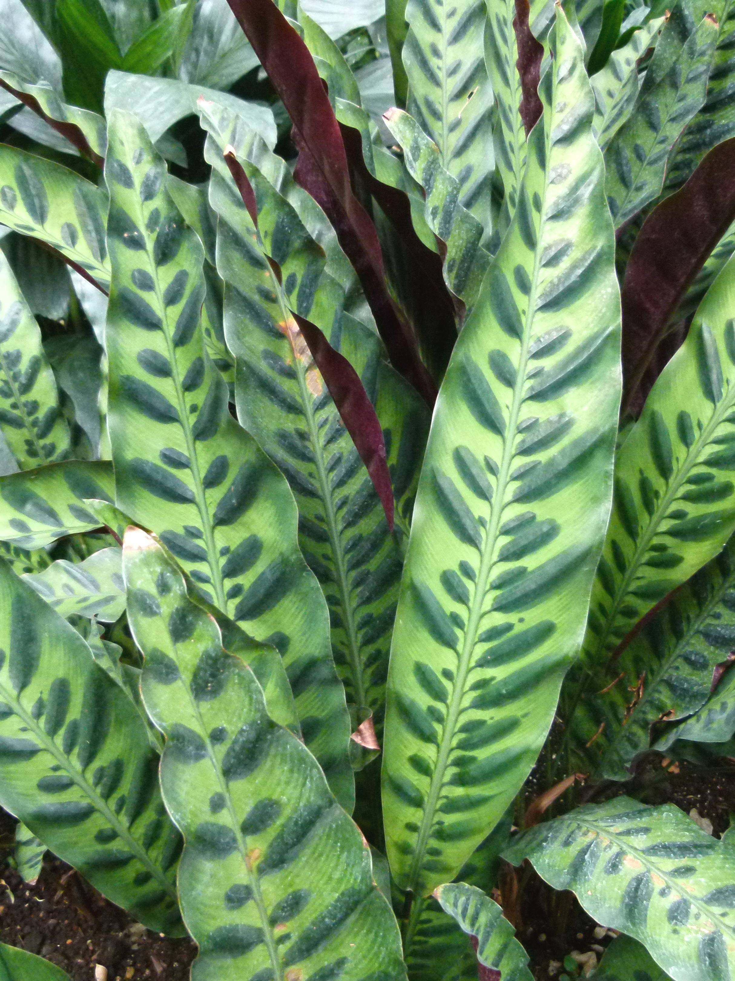 Https Www Green Talk Com Natural Weed Killers