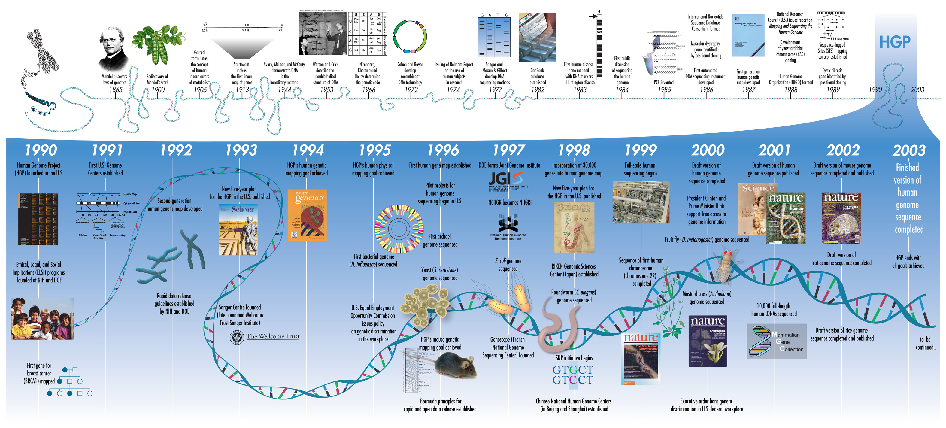 Human Genome Project Nature Vs Nurture