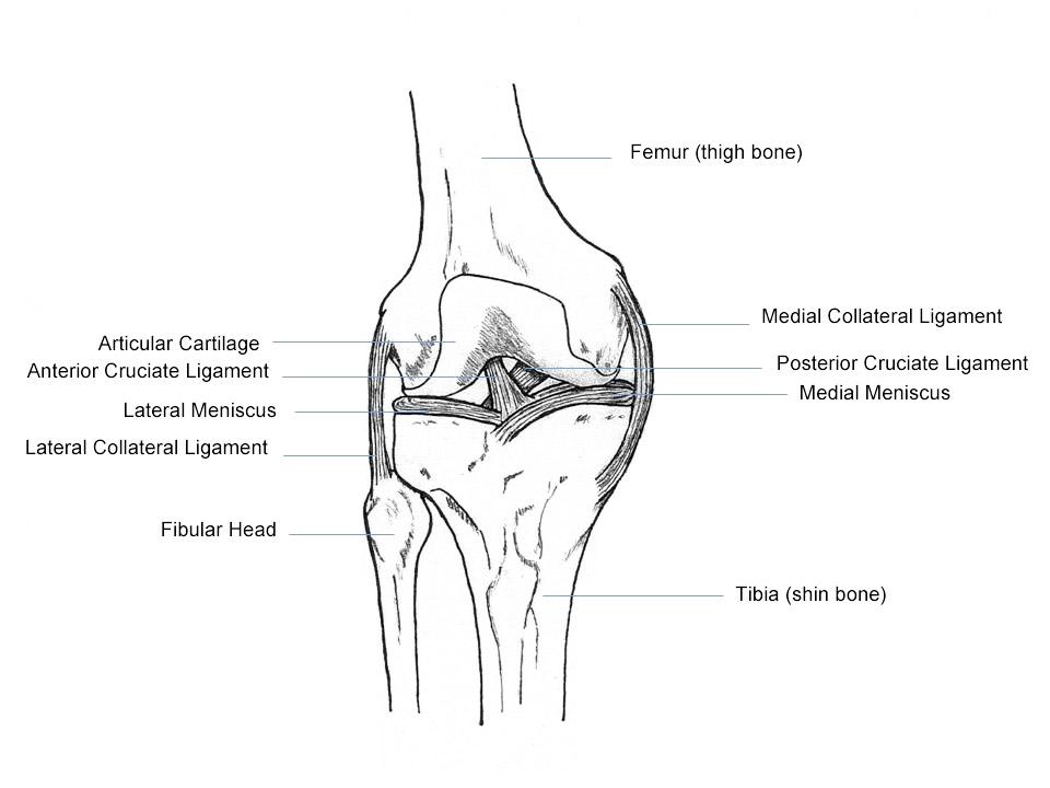 Съвет от експерта: Слабост и болка в коленете, придружена от скърцане