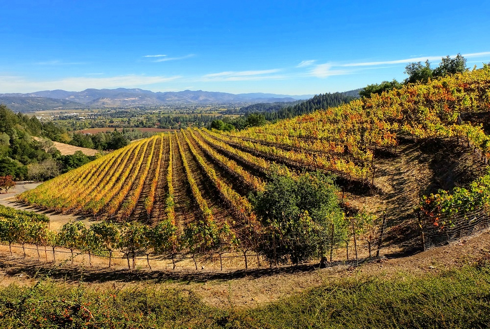 File:Ijevan vineyards.jpg - Wikimedia Commons