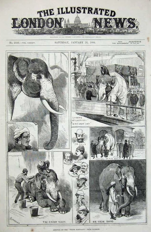 Front page of the Illustrated London News for January 26th 1884, celebrating the arrival of Barnum's Toung Taloung to London. Photo credit: Public Domain Review/Wikimedia Commons [Licensed under CC-PD-Mark]