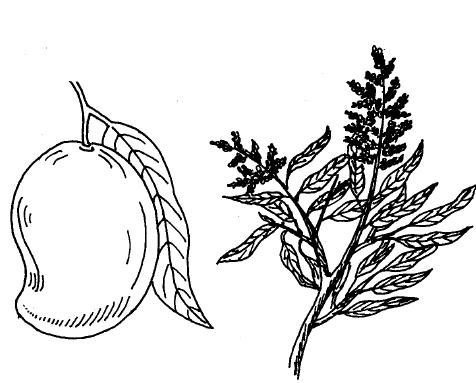 Image Result For Free Tree Coloring