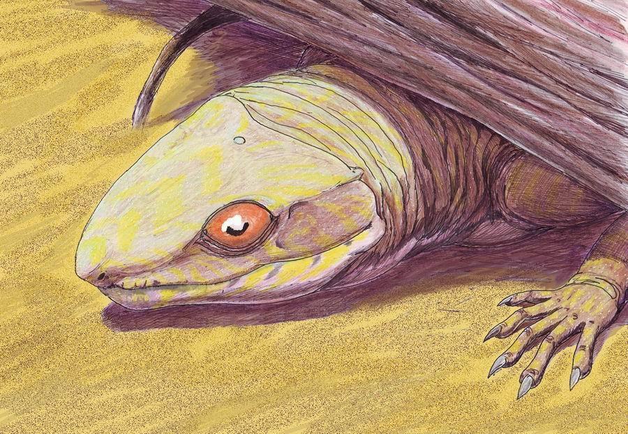 Výsledek obrázku pro Oedaleops